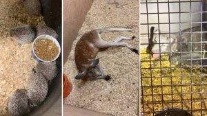 Oakland County man wanted for hoarding of 500 exotic animals